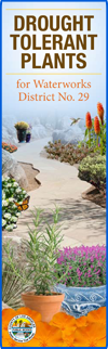 Drought Tolerant Plants for Dist. 29